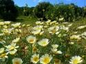 Flowers in the field